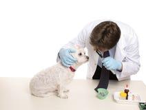 Contrôle vétérinaire photos libres de droits