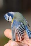 Contrôle d'oiseau Photo libre de droits