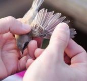 Contrôle d'oiseau Images stock