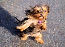 Contra el viento Fotos de archivo libres de regalías