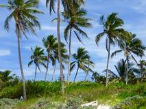 Contra las palmas de coco Fotos de archivo