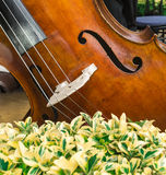 Contrabass at rest Royalty Free Stock Images