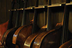 Contrabasses Immagine Stock