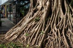Contraditório da civilização e da natureza com sistema de árvore grande imagens de stock royalty free