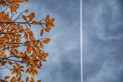Contrail line in the sky above the tree. Airplane contrail straight line across cloudy sky above tree branch with withered yellow leaves. Autumn travel concept Stock Images