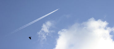Contrails in the sky Royalty Free Stock Photo