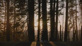 Contraluz asombroso de la vista lateral tirado de la muchacha turística que camina a lo largo del camino forestal hermoso en la c metrajes