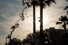 Contraluz de Sun en las palmas foto de archivo libre de regalías