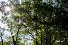 Contraluz de un árbol fotografía de archivo