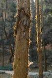 Contraluz en tronco Imagen de archivo