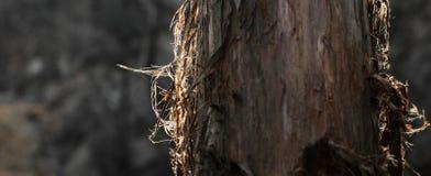 Contraluz en tronco Foto de archivo