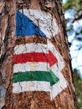 Contrassegni sull'albero Fotografia Stock