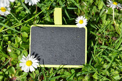 Contrassegno su erba Fotografia Stock