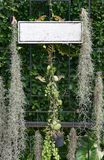 Contrassegno vuoto che appende con la decorazione delle piante Immagini Stock Libere da Diritti