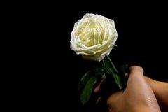 Contrasté de noir et blanc de la main tenant la rose blanche sur le fond noir Image stock