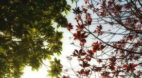 contrast Royaltyfri Foto