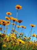 contrast blommar skyen royaltyfri bild