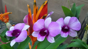 Contrast colour flowers Stock Photo