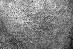 Contrast Elephant skin Royalty Free Stock Image