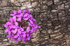Contrast of Mauve Orchid Against Textured Bark of Tamboti Log Stock Photo