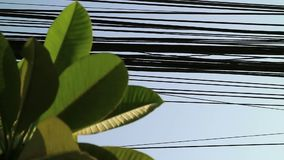 Nature and technology, Plumeria tree leaves and electrical power lines. Contrast between nature and technology, Plumeria tree leaves and electrical power lines stock video