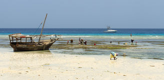 Zanzibar beach scene Royalty Free Stock Photo