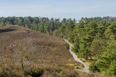 Contrast of one part green trees and in another dry grass. On a sunny day in Brunssummerheide in Limburg in the Netherlands Holland with a blue sky stock image