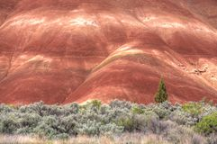 Contrast of the Painted Hills. Royalty Free Stock Image