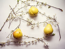 Contrast pears Stock Photography