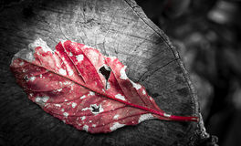 Contrast of colors of a leaf in a botanical garden Royalty Free Stock Photography