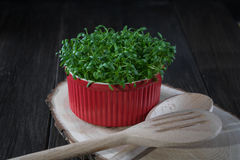 Contrast of red and green. Fresh cress salad in red po Stock Photos