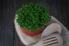 Contrast of red and green. Fresh cress salad in red pot Royalty Free Stock Photography
