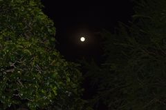 Moon shoot with peeping leaves royalty free stock photography