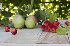 The contrast of small and large apples Royalty Free Stock Photo