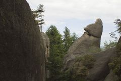 The contrast of stones and trees. The picture depicts the contrast of big rocks and trees but shows the similarity of nature`s beauty stock photo