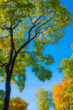 Contrast trees on the blue sky Royalty Free Stock Photo