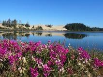 Contrast tussen hete zandige duinen en een weelderig perceel van bloemen stock fotografie