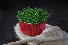 Contrast van rood en groen Verse tuinkerssalade in rode po stock foto's