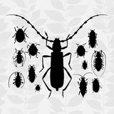 Contrast vector set with silhouette of bugs. Royalty Free Stock Images