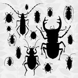 Contrast vector set with silhouette of bugs. Drawing of beetles. Insect on the background with gray leaves. Cartoon bug illustration Royalty Free Stock Image