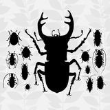 Contrast vector set with silhouette of bugs. Drawing of beetles. Insect on the background with gray leaves. Cartoon bug illustration Royalty Free Stock Photo