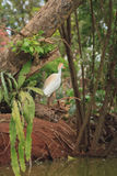 Contrast of the white bird perched in the midst of nature`s green stock photos