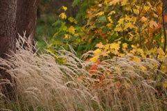 Contraste colorido del otoño Fotos de archivo