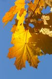 Contraste d'automne Photographie stock libre de droits