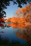 Contraste d'automne image libre de droits