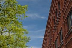 Contraste da árvore da construção Fotos de Stock Royalty Free
