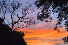 Contraste das árvores das cores da nuvem Imagens de Stock Royalty Free