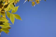 Feuilles de vert contre le ciel bleu Image libre de droits