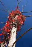 Contraste del otoño fotos de archivo libres de regalías