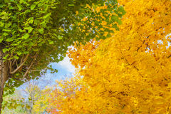 Contraste del otoño Fotografía de archivo libre de regalías